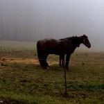 Štítné na Vláří - kůň